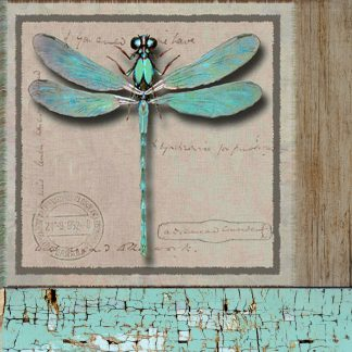 Dragonfly, Copyright Karen J Williams